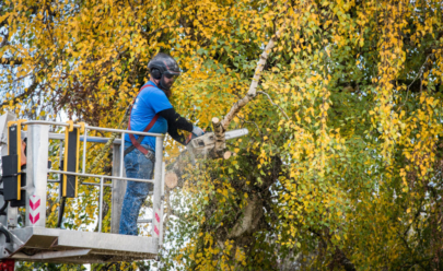 Tim Brewer Tree & Stump Service employee Derick Swain trims a tree in Corvallis, Oregon.