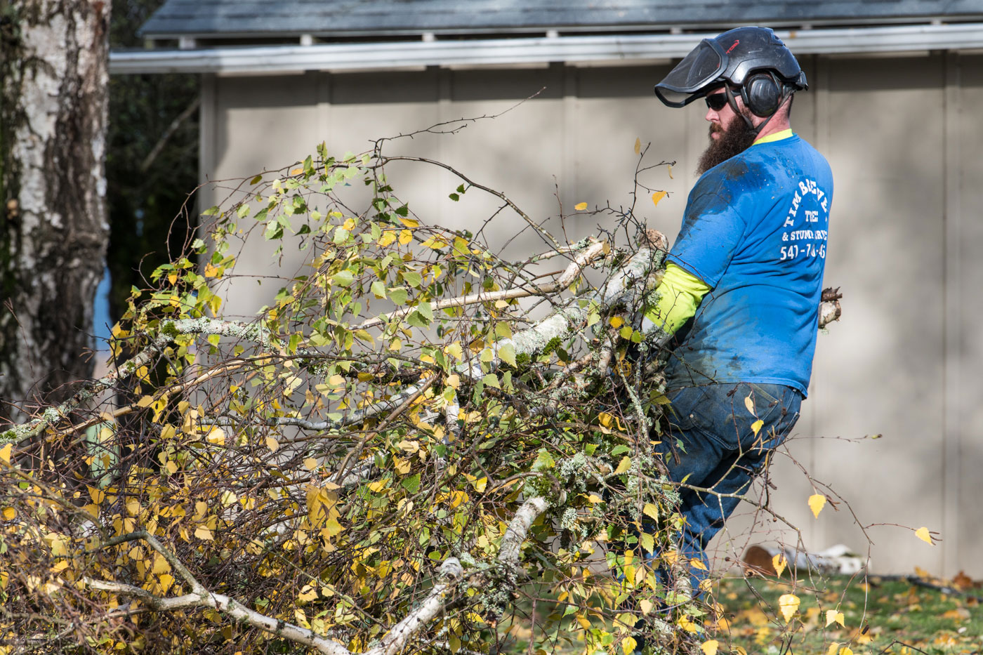 Tim Brewer Tree & Stump Service employee Derick Swain takes tree limbs to the chipper in Corvallis, Oregon.