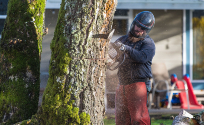 Tim Brewer Tree & Stump Service employee Derick Swain begins to fell a tree in Corvallis, Oregon.