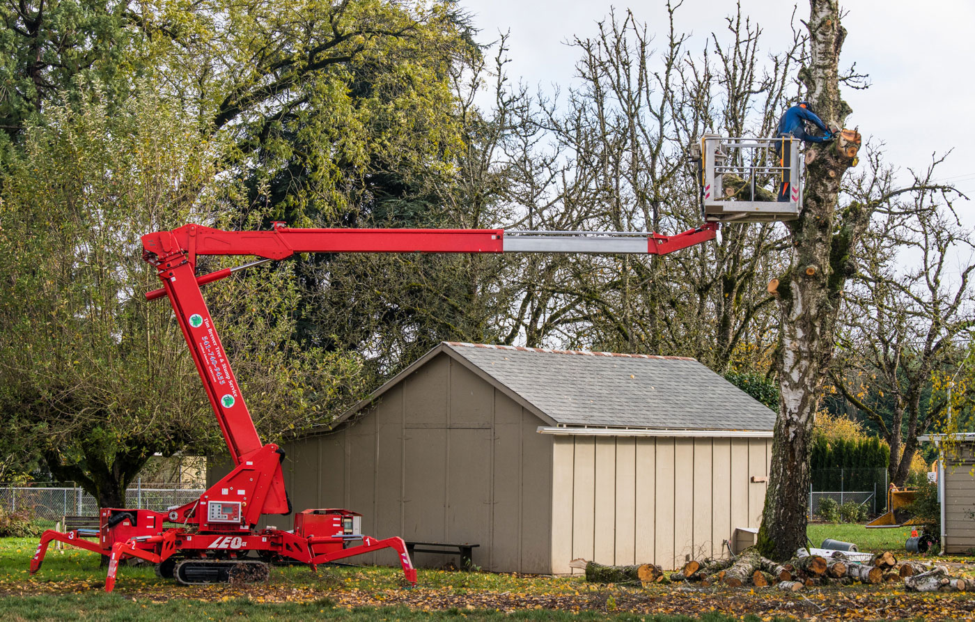 Tim Brewer Tree & Stump Service employee removes section of a tree in Corvallis, Oregon.